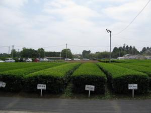 Sayama2013_017
